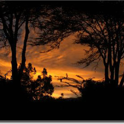 In The Bush - Soulful, South African House Mix (Jan 2012) - SA