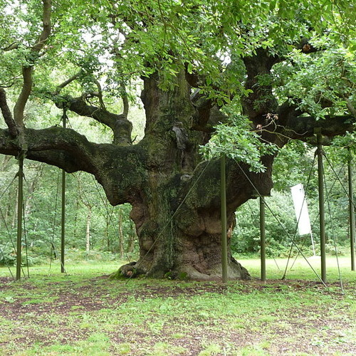 Colloquy of the Oak and Holly King