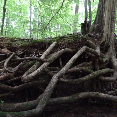 Heavily Rooted