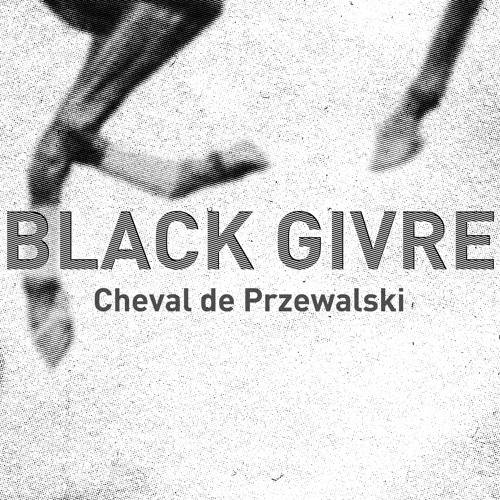 04 Cheval de Przewalski