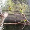 Masked Lovebird & A Monster (Auckland Zoo, 2013)
