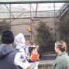Kid Likes Loud Parrots (Auckland Zoo, 2013)