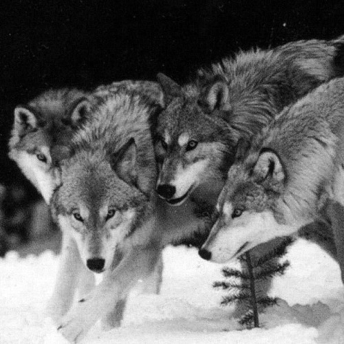 Running with the wolves (Original mix)