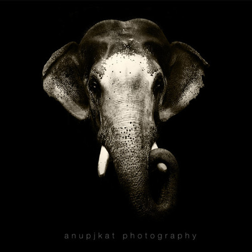 Elephant (Original Mix)
