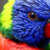 ang mga kwento ni Joker - ang espiyang Parrot