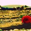 Download Afshin Amini -100 Sal Tanhayee Mp3