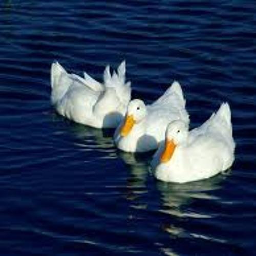 HIP HOP 8 Τα παπάκια / The ducks(Saur One)