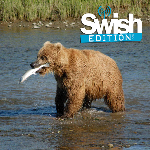 Swish Edition Episode 231: Alaska Bound To See Bears