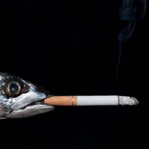 Bluff - El pez que Fuma.
