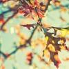 The Beautiful Fall (beat by K. Rhodes) (ft. Pali Kari)