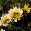 Le Temps Des Fleurs Lena