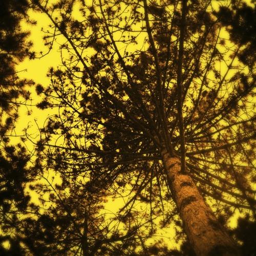 L2T2 - Under Trees