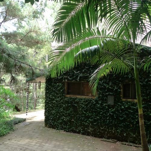 A Home In The Jungle (clip)