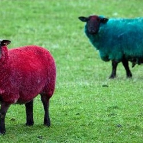 The Herd of red and blue