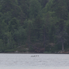 Arctic Divers on Lake Inari