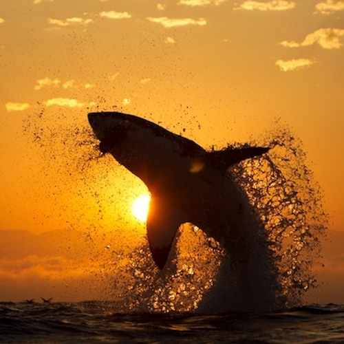 Shark Killers Summer Sessions Vol. 1