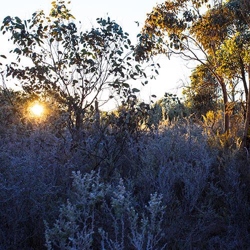 Winter Woodland - Kings Plains National Park, NSW, Australia
