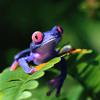 Mr. Frog (DEMO)