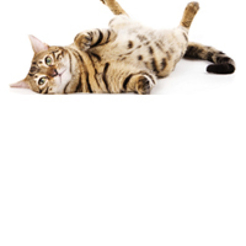 2013 Jul - Cats Protection Advert on Gravity FM