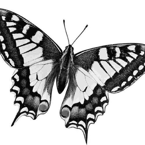 Kelebekler ne tuhaf!..