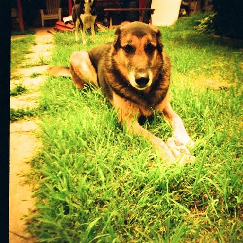 Puppy Dog, 1996