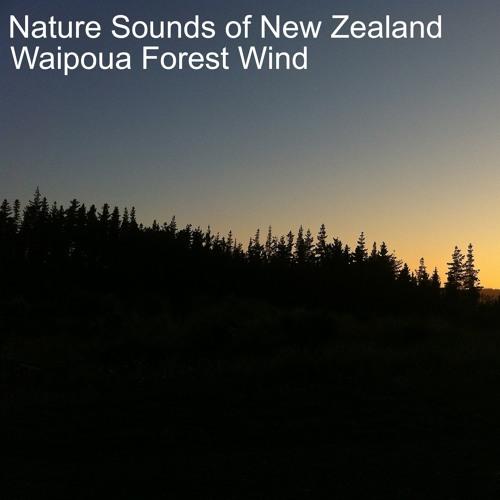 Waipoua Forest Wind