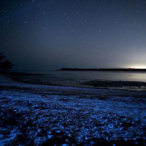 Island Star Prod. By Poppz
