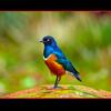 Inshallah | Maher Zain - إن شاء الله | ماهر زين