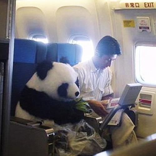 Howe Steel - Pandas Fly Business Class Mix