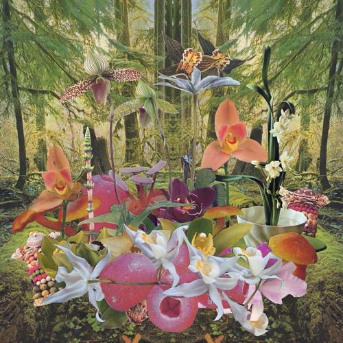Monster Rally - Orchids