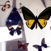 Exhibits I. The Wall of Glass and Butterflies