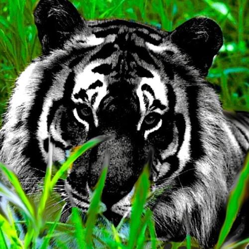 Nasty Nachos & Black Tigers