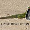 Lizerd Revolution 2013