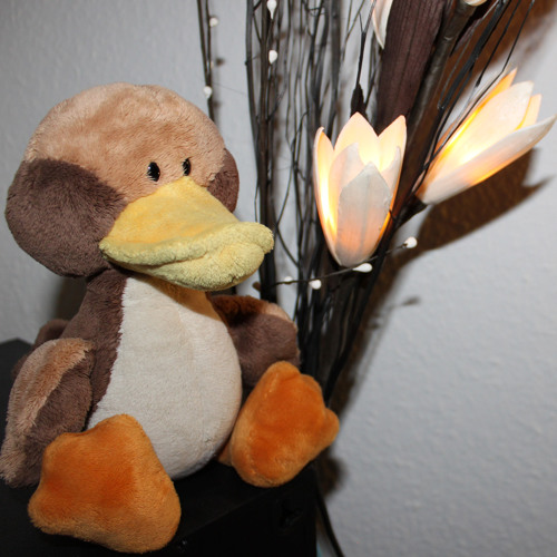 Der schwerste Gang einer Ente
