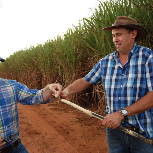 Efforts to Reinvigorate Sugar Ethanol for Cars in Brazil