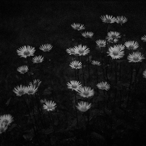 Puiset heilat - Surrealistinen yönäytös (2013)