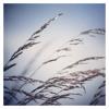 Steve Gibbs - Ambient Mix #2