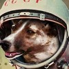 Tori Amos - / Space Dog - Pip Under The Pink RMX /