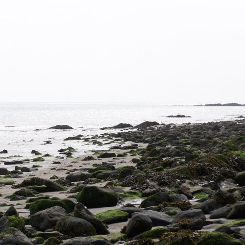 Sea Side Shimmer