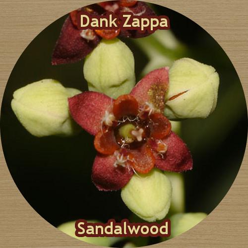 Sandalwood [FREE DOWNLOAD]