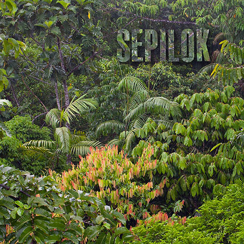 Rainforest Ambience - Sepilok Forest Reserve, Sabah, Malaysia *FREE SOUNDSCAPE*