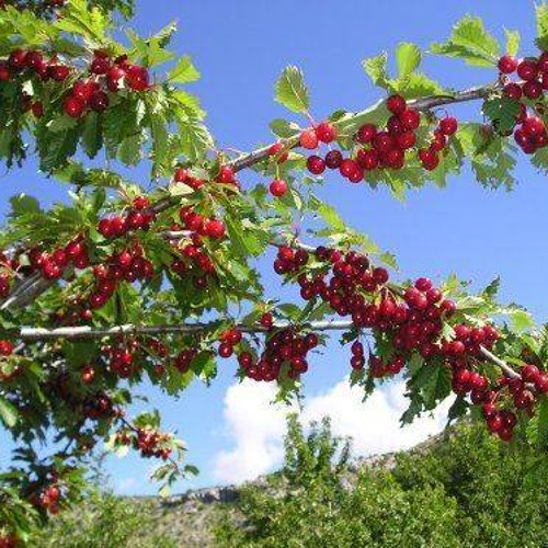 Košnica - Beehive