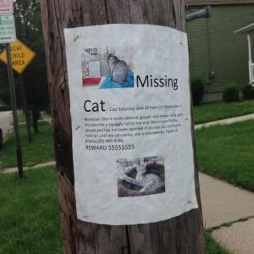 Missing Cat- Super Friendly