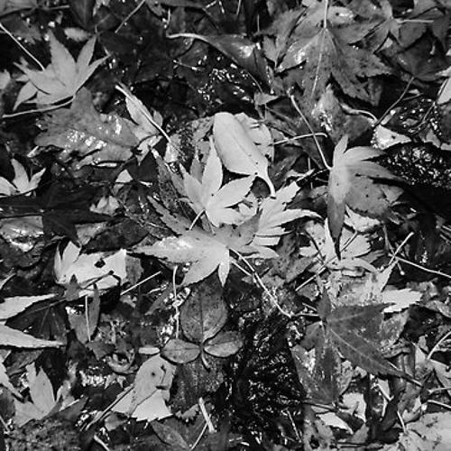 Court | Autumn Mix