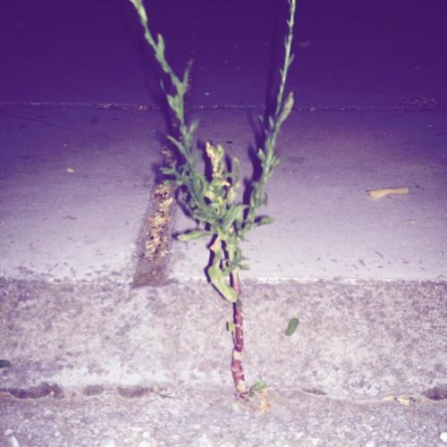 Dogmother - Λουλούδι στο τσιμέντο