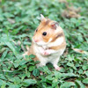 Humoresque/Quirky - Hamster Journey