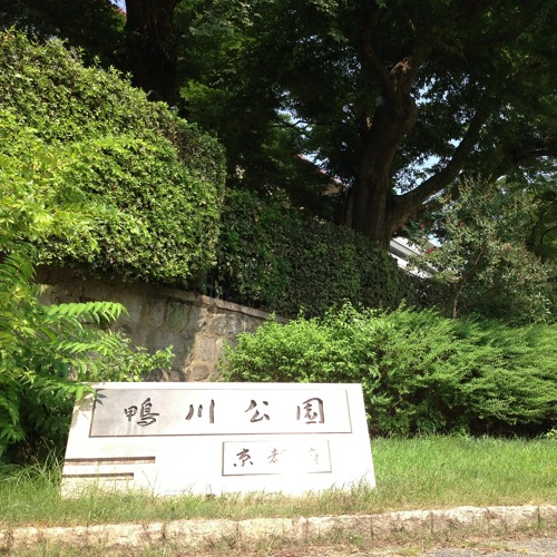 Cicadas at Kamogawa Park in Kyoto, Japan