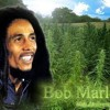 AtomaRe *Live* @ BoB MaRleY- I smoke Two Joints