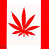 130815 Thu 910am 1630 Idiot Canadian Stoner