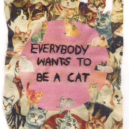 Everybody Wants To Be A Cat (Original Mix)